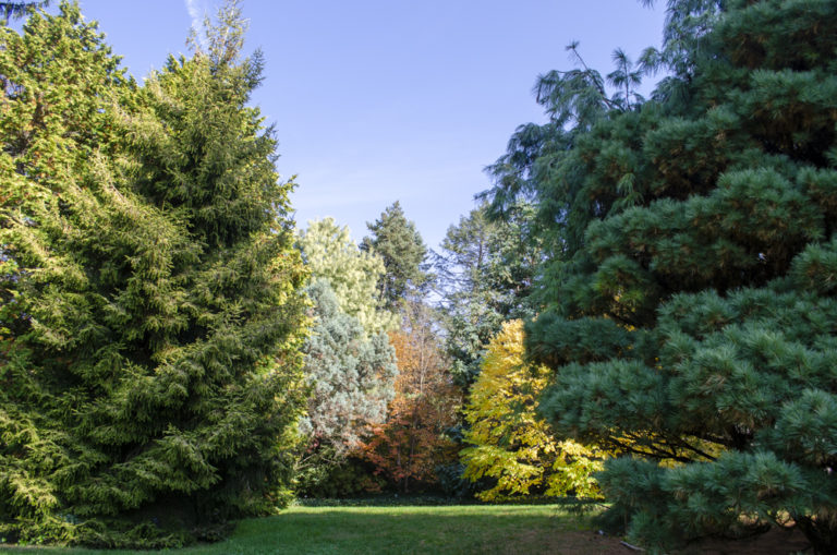 Gardens main conifer Wave Hill 01