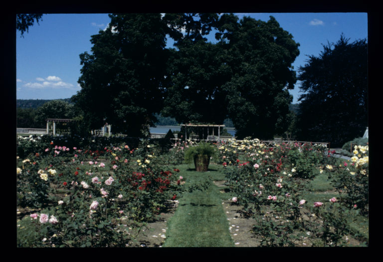 History rose garden Marco slides credit Marco Polo Stufano 195