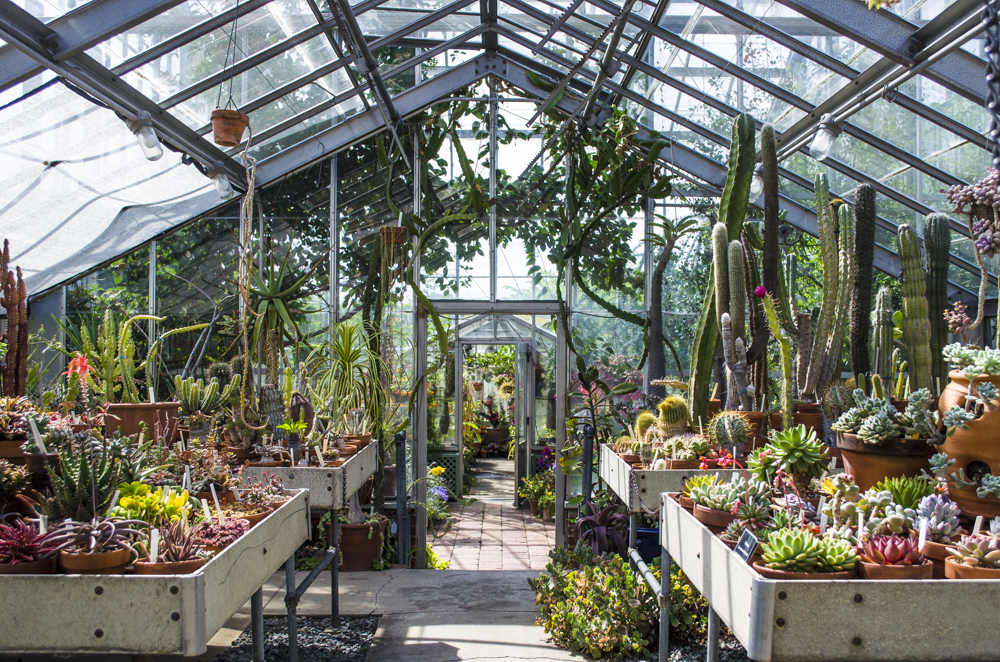 2020 spring events Cactus and Succulent House Tour Wave Hill