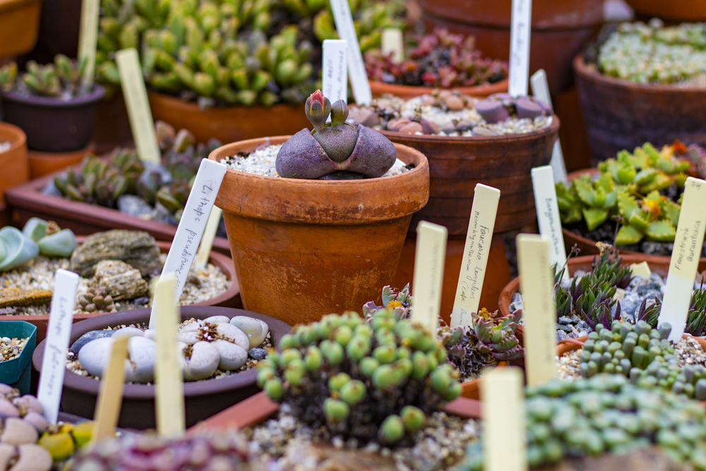 2020 spring events Lessons from Wave Hill Cultivating Succulents Wave Hill