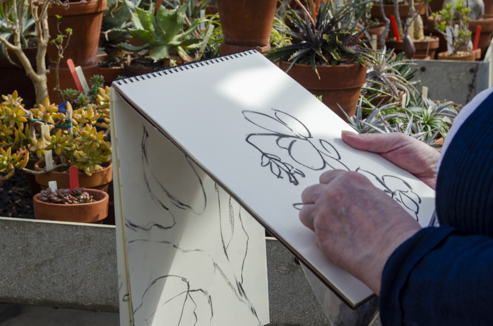 2020 spring events Plants with Personalities Sketching Cacti and Succulents Wave Hill 2